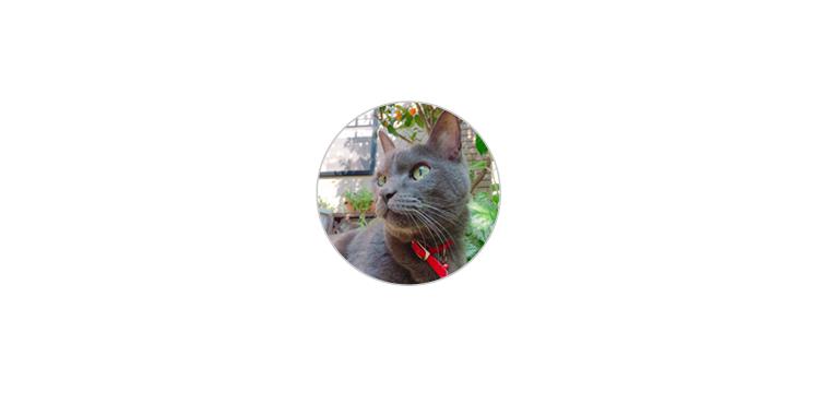 """【イマイチ】2~3年生ならOK """"ペット"""""""