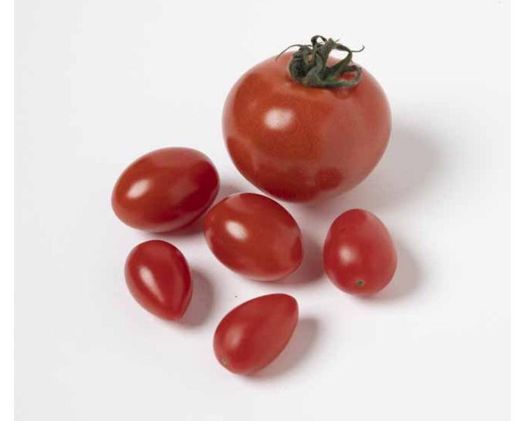 大きなトマトより小さなトマトが◎