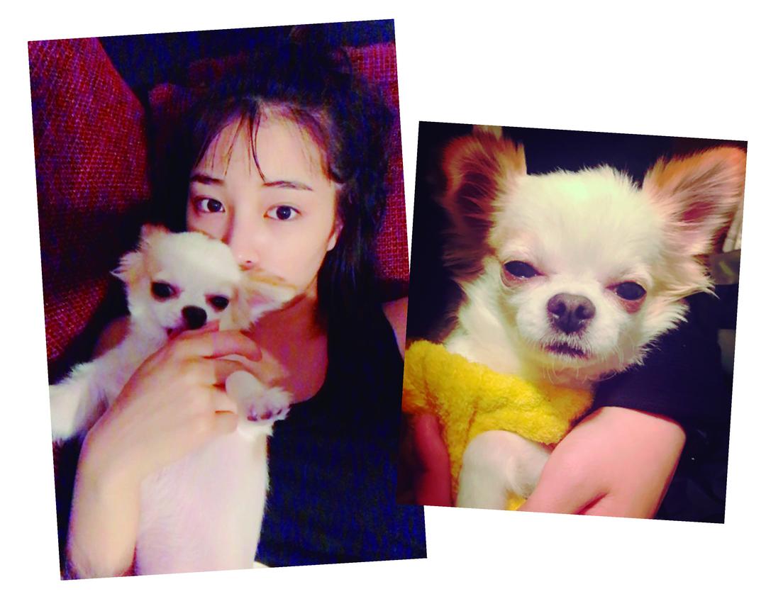広瀬すずちゃんは愛犬の「ぱーぷー」